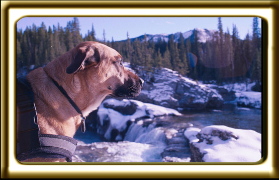 A black muzzled Rhodesian Ridgeback cross, Ebbey the canine actor reluctantly stands near a waterfall.