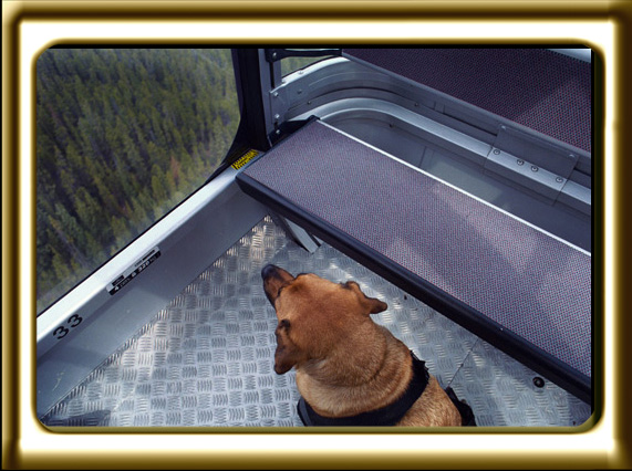 A black muzzled Rhodesian Ridgeback cross, Ebbey the canine actor rides Alberta's Banff Gondola.  The silver metal floor has metal embossing to prevent slipping.